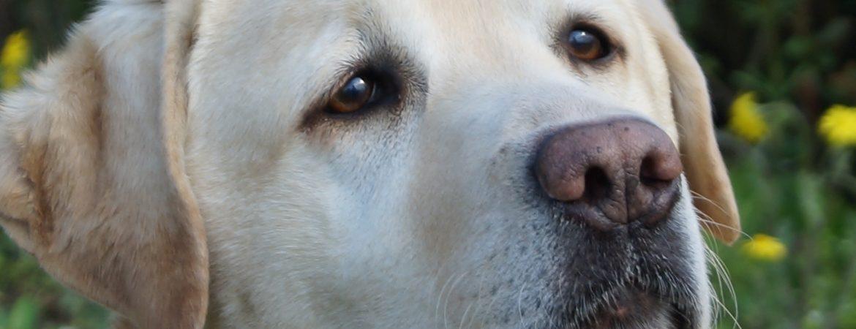 dogbistro-premium-termekek-kedvenceknek