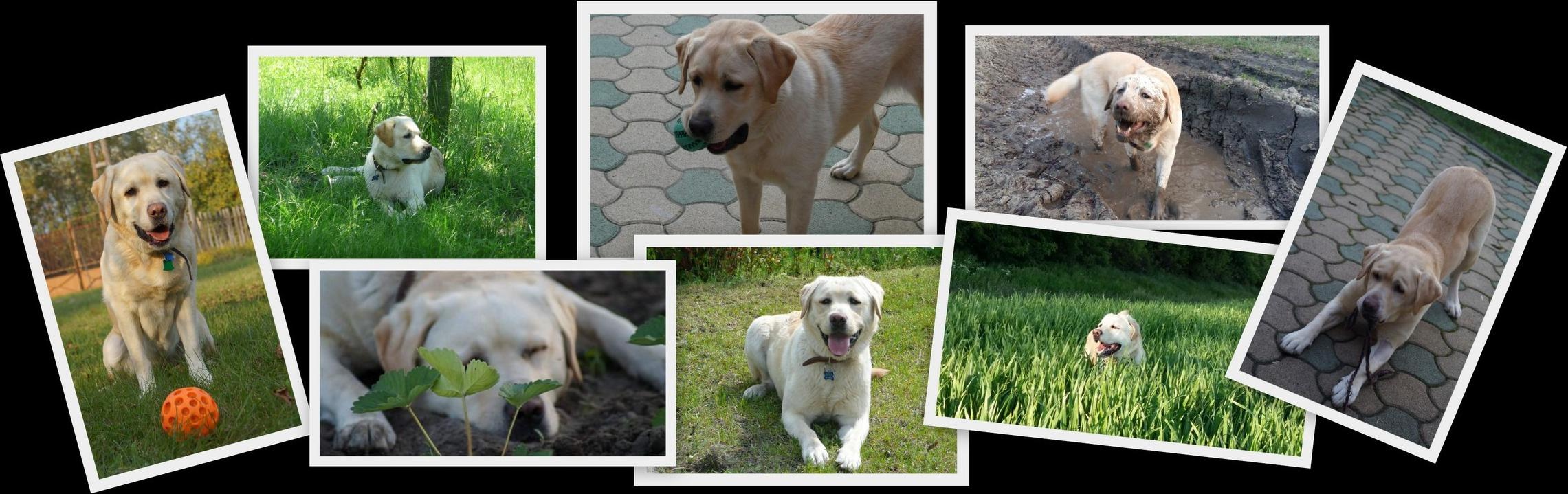 dogbistro-rolunk