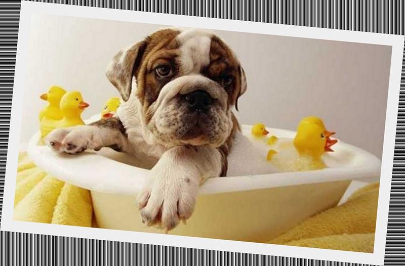 dog-bath-t