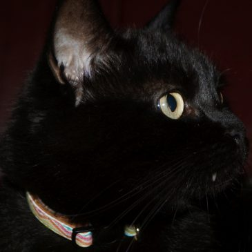 Kormi cica története