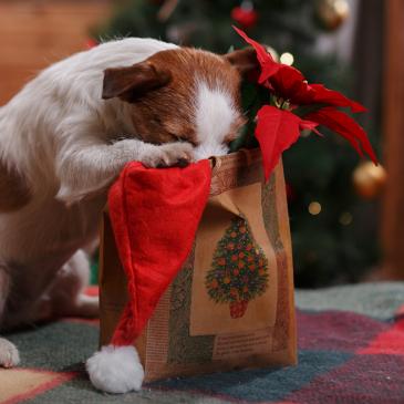 Ajándék kutyáknak Karácsonyra – 3+1 tuti tipp