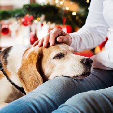 Kutyabarát Karácsony – Stresszmentes Ünnep kutyádnak is