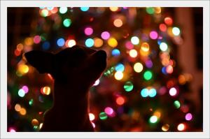 Kutyabarát-Karácsony-Stresszmentes-ünnep-kutyádnak-is