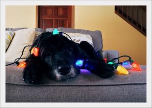 Kutyabarát-Karácsony-a-kutya-nem játék