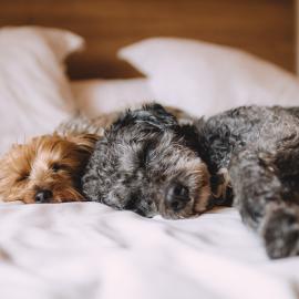 Kutyafekhely – Hogyan válassz kutyaágyat Kedvencednek?