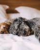 kutyafekhely-hogyan-valassz-kutyaagyat-kedvencednek