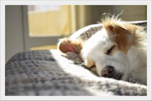 kutyafekhely-kedvenced-kedvenc-kutyagya