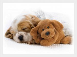 kutyafekhely-pihenni-jo