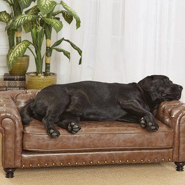 Kutyafekhely típusok – Te tudod, melyik mire való? Kövesd az Útmutatót